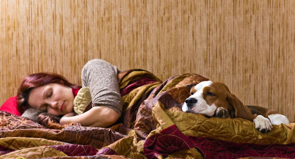 overnight pet sitting services